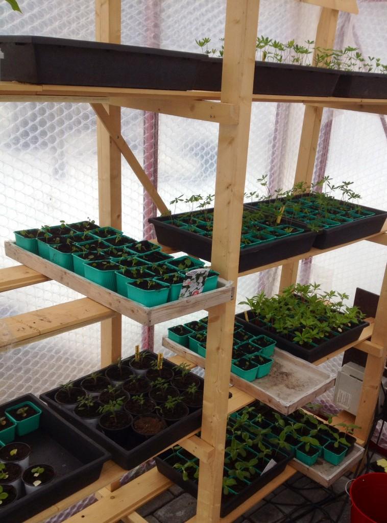 De växer, mina små plantor.
