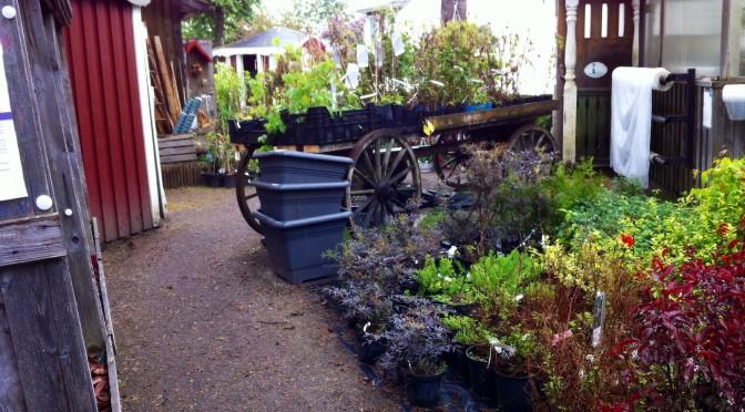 Oves plantor… Fascinerande ställe!