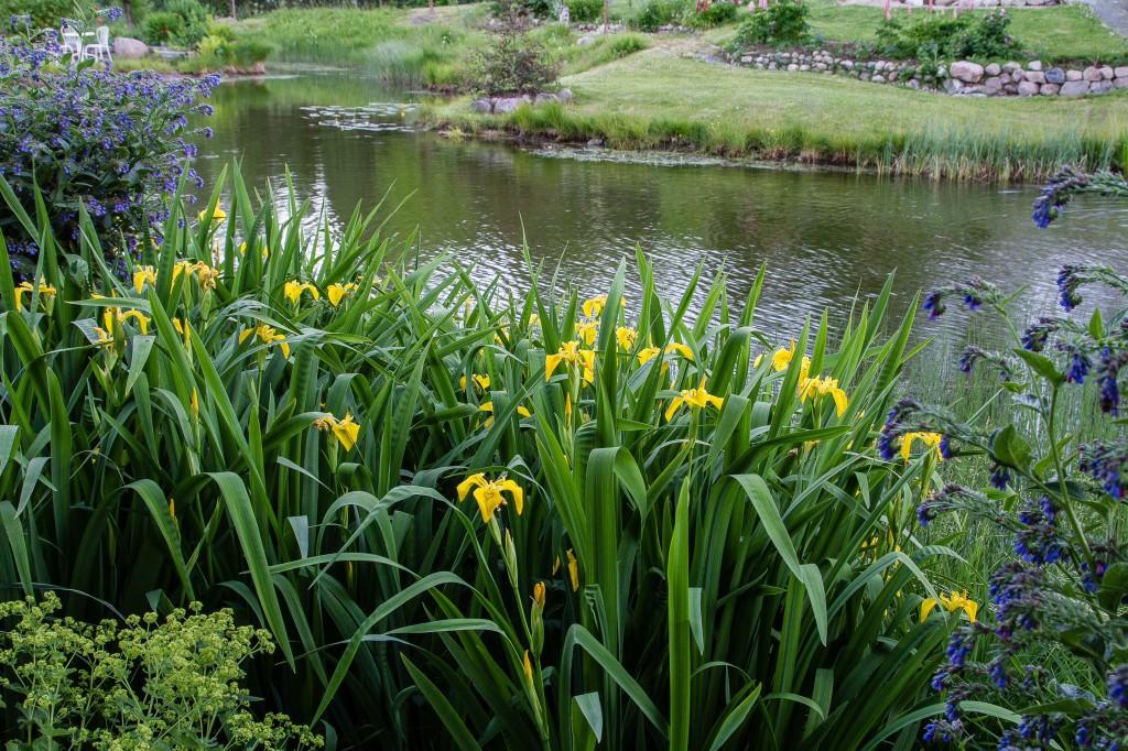 Vattennivån i dammen är lägre än på många år..