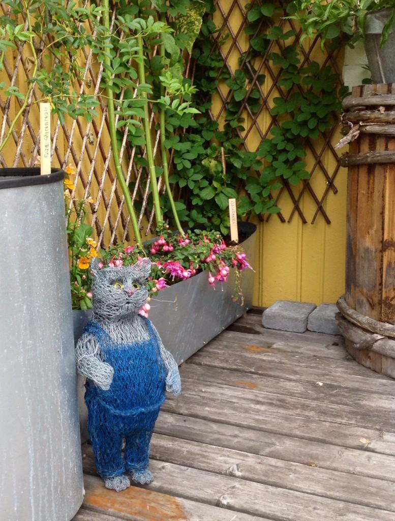 Pettsons katt spanar ut över vår veranda.