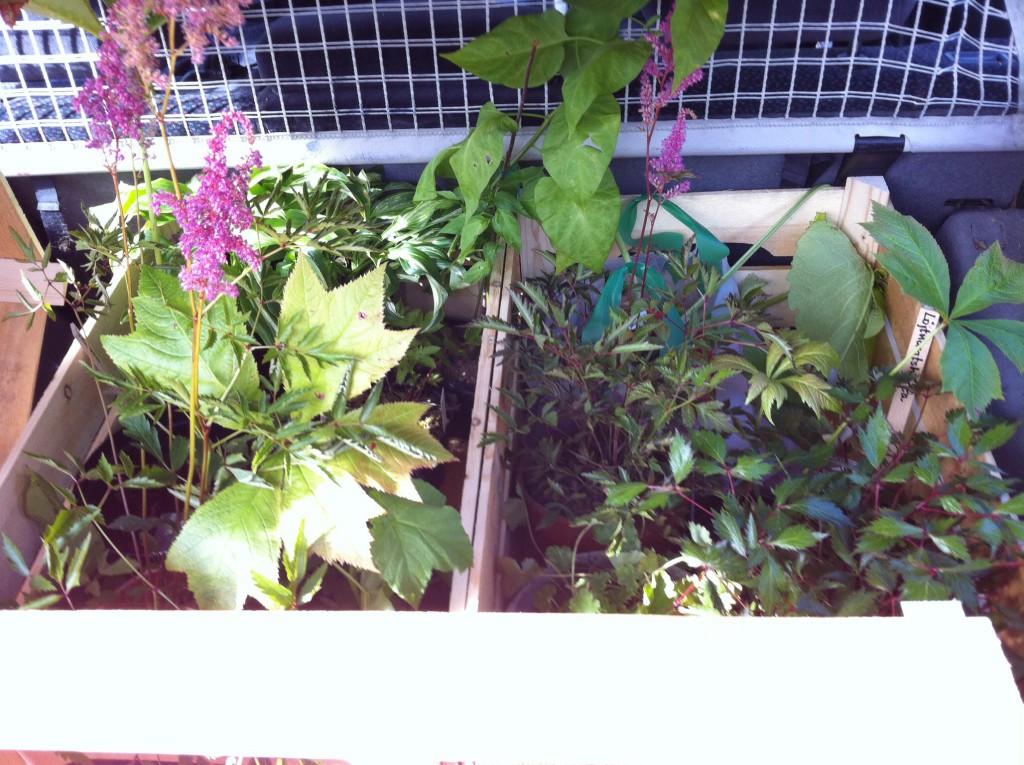 Skuffen full med plantor, som vanligt. :-)