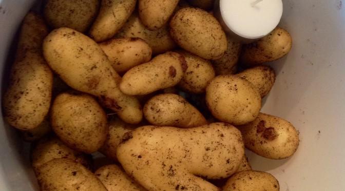 Potatisodling, tydligen inget för oss.
