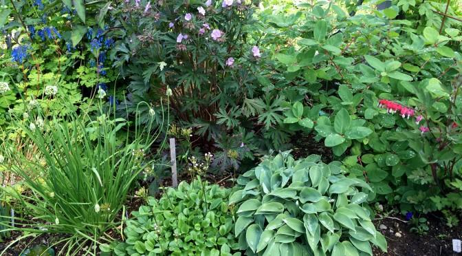 Trädgårdsrajden – Besök i Öravan