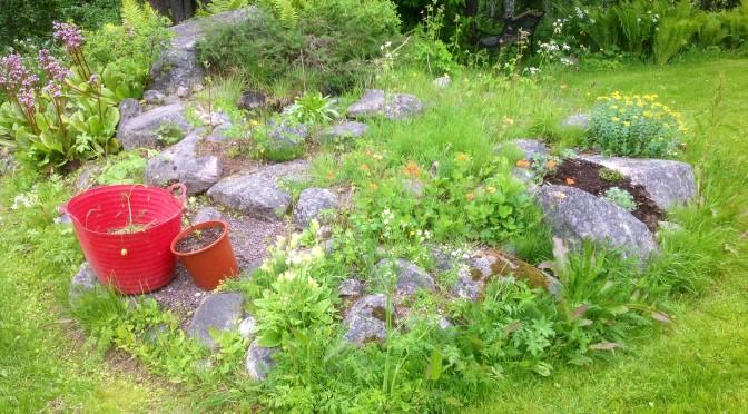 Baksidan av vår trädgård